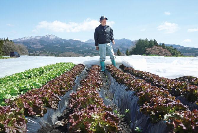 山に囲まれた涼しい土地でレタス類を栽培しています。