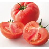 畑の作り手通信:トマトの旬です!