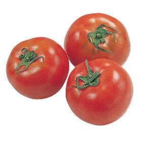 なるほど台所帖vol.45:夏野菜の保存方法をご紹介します