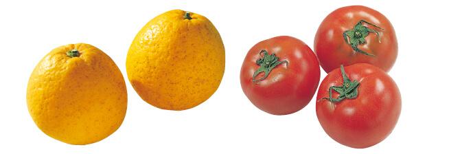 果汁を食べる河内晩柑・800g&水切り栽培のうま夏トマト・400g