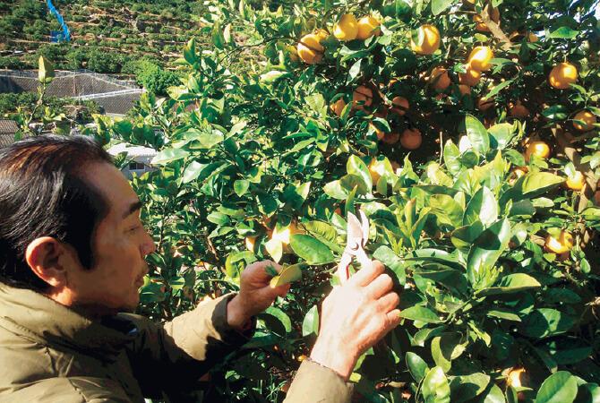 発芽したら早めに剪定。果実に養分が回るよう、枝を整えます。