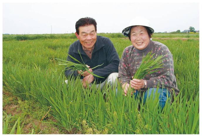 有機・シャキシャキ香りにら生産者、宮城県登米市 無農薬生産組合 石井稔さんと妻の洋子さん(右)