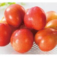 プラムの栽培は、収穫のタイミングが要。特に「大石早生」は、難しいんです。