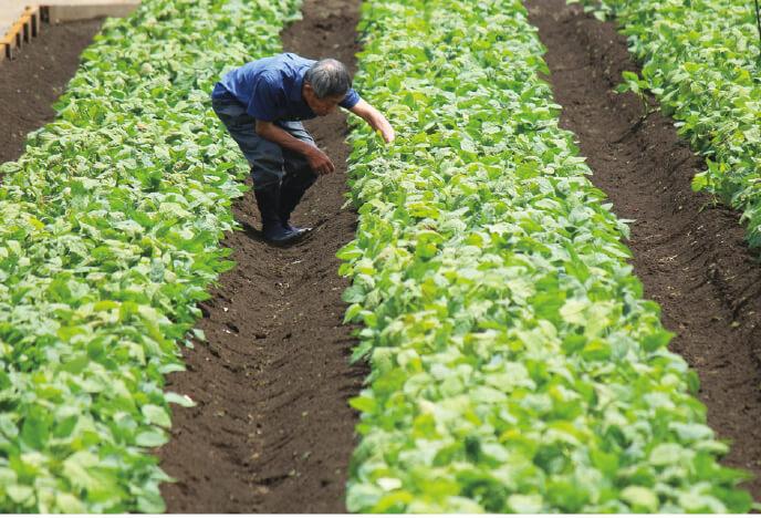 堆肥と炭で微生物の住みやすい土をつくり、育てている枝豆