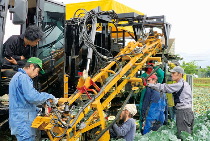自動でブロッコリーの茎を切って集荷用コンテナに運びます