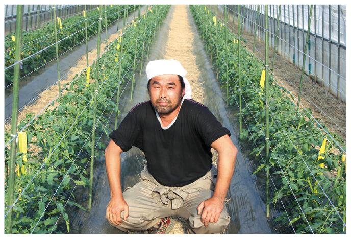 ミニトマト(丸型他)生産者、山形県高畠町 おきたま興農舎 高橋弘道さん