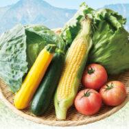 今年も 「八ヶ岳・軽井沢から夏の高原野菜セット」をお届けします。