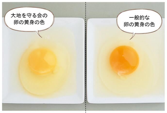 卵の黄身の色の比較