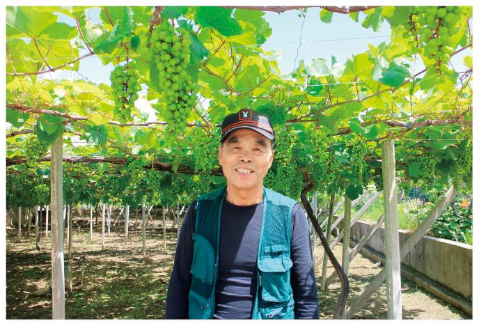 こくあま巨峰の生産者、山梨県甲州市 勝沼平有機果実組合 渡辺孟さん