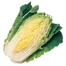 なるほど台所帖vol.52:秋冬野菜の上手な保存方法