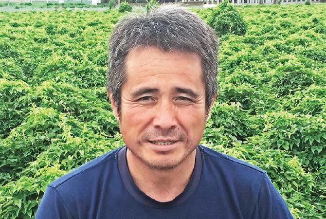 ぎゅっと凝縮甘み白菜生産者、埼玉県熊谷市 岡村グループ 岡村文男さん