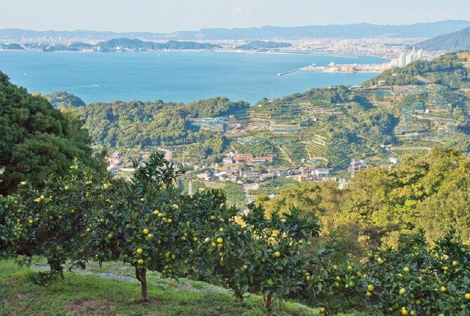 和歌山県海南市紀伊水道が一望できる傾斜地は、日当たりも水はけも良好