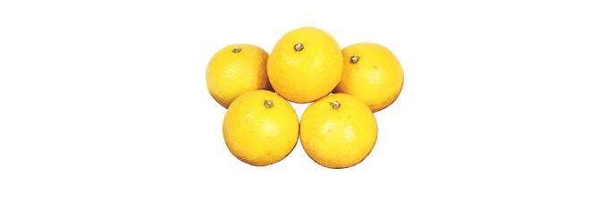 ニューサマーオレンジ