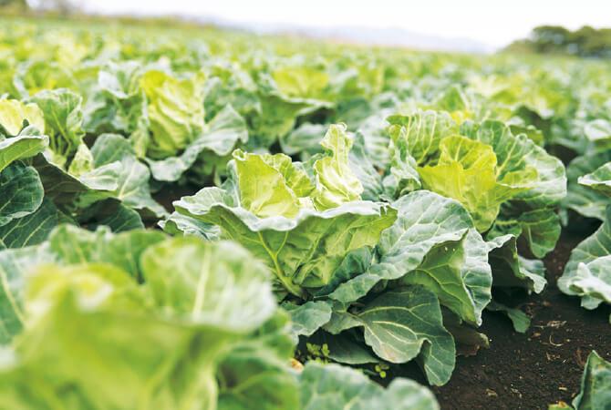 三浦半島にある畑は潮風から降り注ぐミネラルを含んだ肥沃な土壌