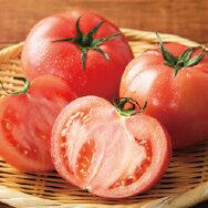 うちの自信作、水切り栽培のトマトを食べてみてください!