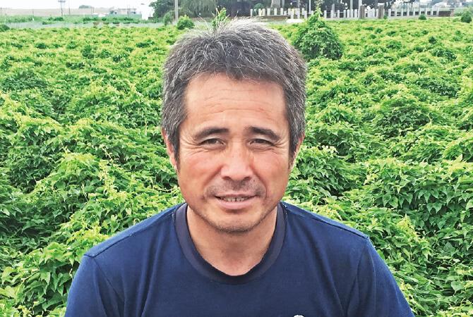 人参生産者、埼玉県熊谷市 岡村グループ 岡村文男さん