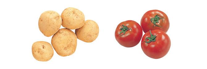 ホクホクじゃがいもながさき黄金・500g&水切り栽培のうま夏トマト・400g