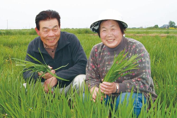 ニラ生産者、宮城県登米市 無農薬生産組合 石井稔さん・洋子さん