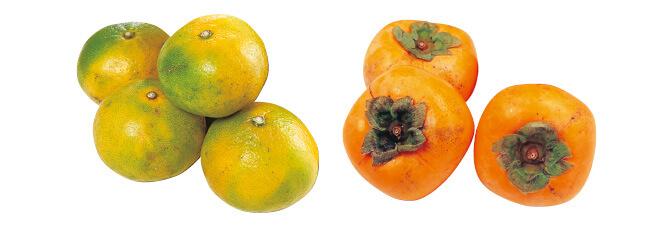 極早生温州みかん・400g&種なし柿(刀根柿または平核無柿)・600g