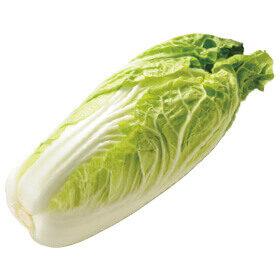 食べ切りやすいサイズの「ミニ白菜」